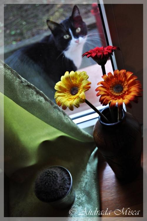 Motan alb-negru si flori