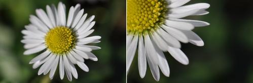 Macro Floare
