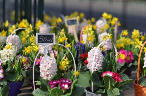 Flori de vanzare